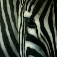 aerograf airbrush zebra